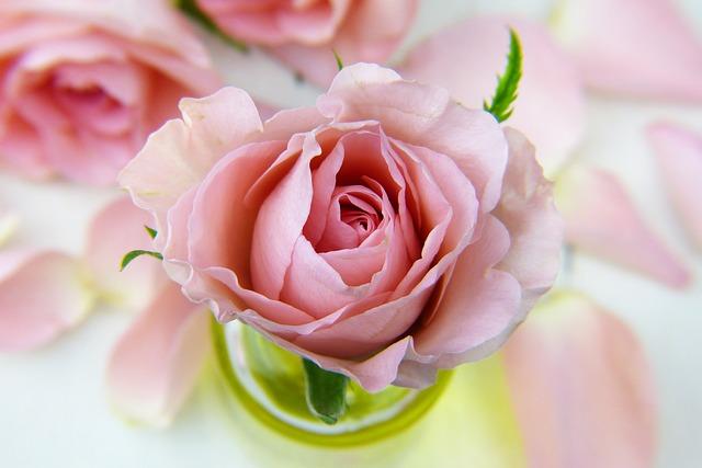 美容 バラ